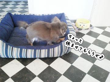 NEC_0004_20120124163917.jpg