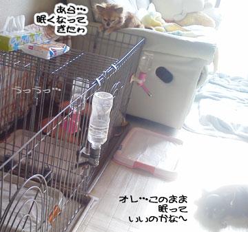 NEC_0005_20120113121109.jpg