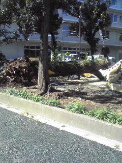 木が倒れてた