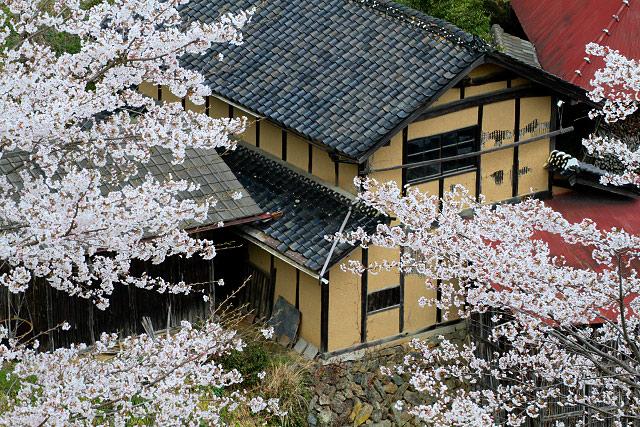 「醍醐桜」岡山県真庭市