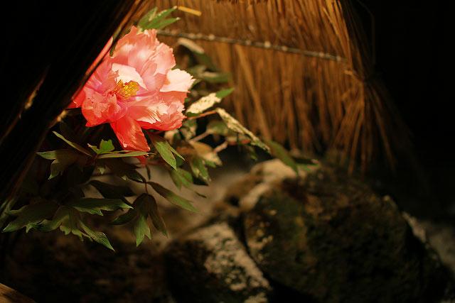 大根島ぼたんまつり「由志園」
