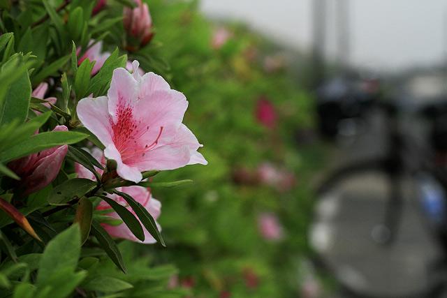 岡山県倉敷市茶屋町児島自転車道~風の道 ポタリング サイクリング