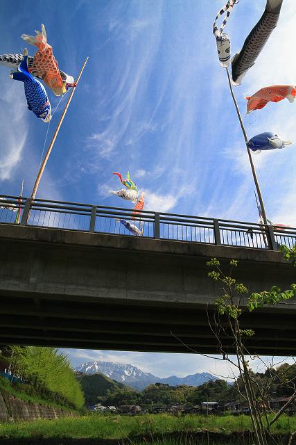 江府町 夜振橋のこいのぼり~大山南壁を望む