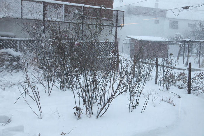 1111雪01