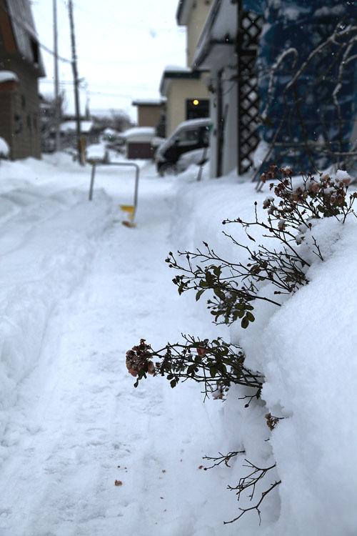 1112雪からフェアリー