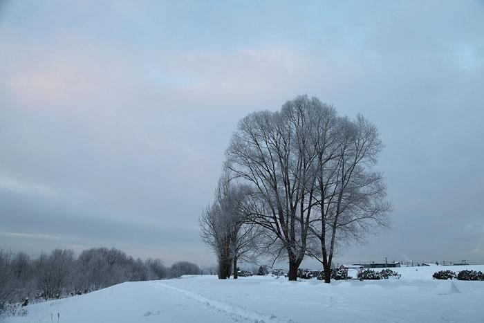 1112寒い日の川03