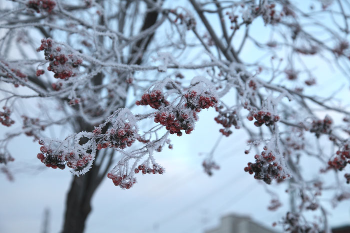 1112寒い日の川05