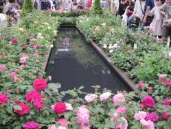 池のまわりに咲くバラたち