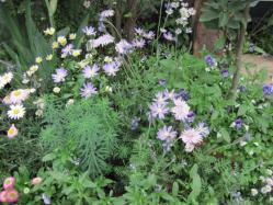 足元の小花たち