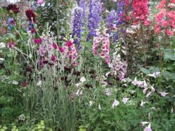 印象派の庭④