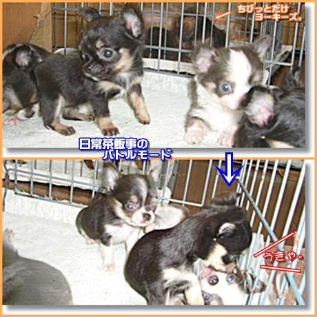 chi_20110820232037.jpg