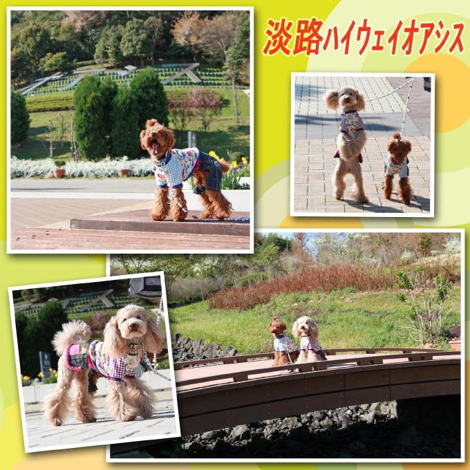 2-2_20110501185533.jpg