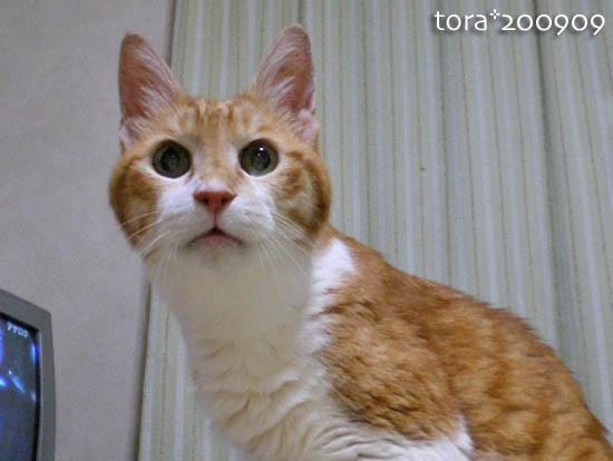 tora09-09-09.jpg