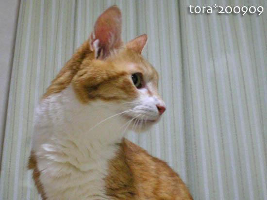 tora09-09-11.jpg