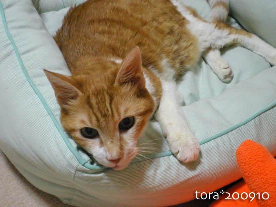 tora09-10-92.jpg