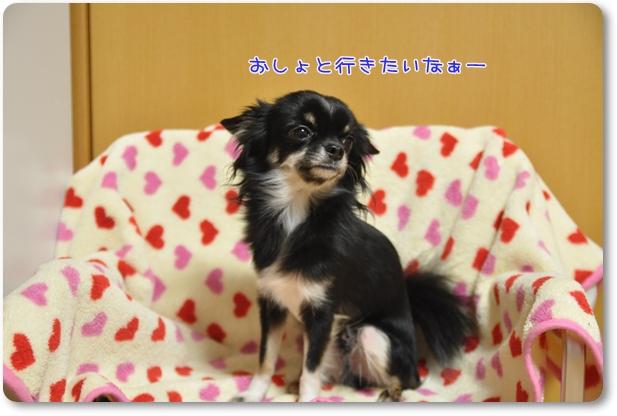 080_20091024200122.jpg