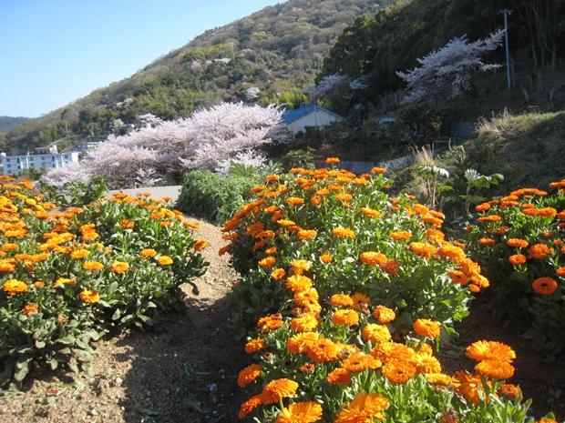 花樹海下の花