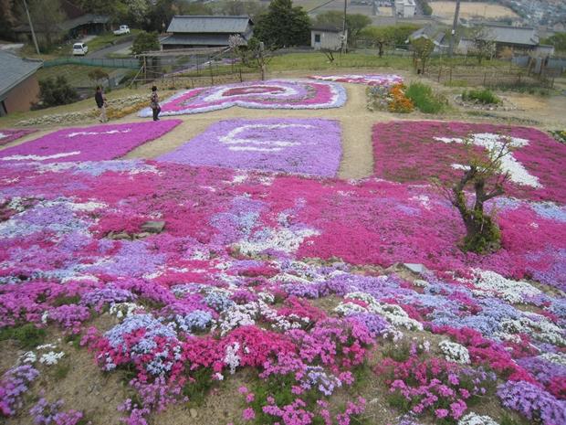 曽江名の芝桜