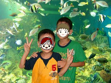 水族館2009_4