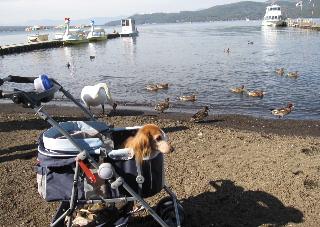 yamanakaharu_20111028231448.jpg