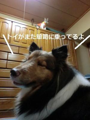 CIMG0945.jpg
