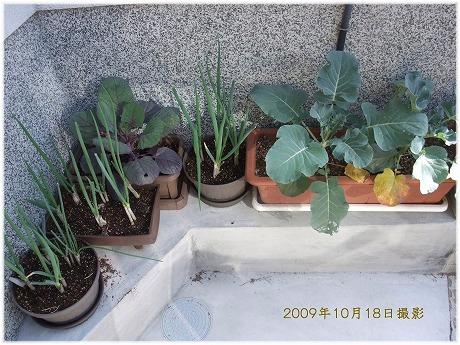 2009-10-18-13.jpg