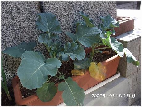 2009-10-18-17.jpg