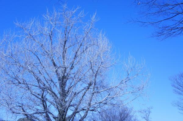 2012 白い木