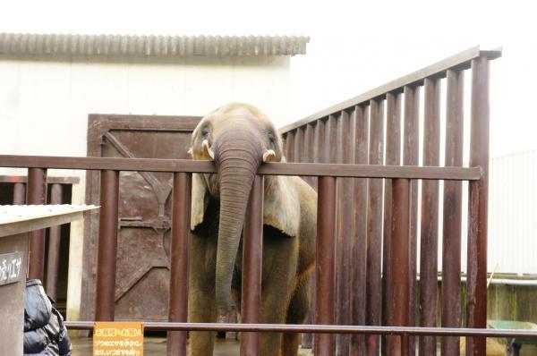 別府象さん