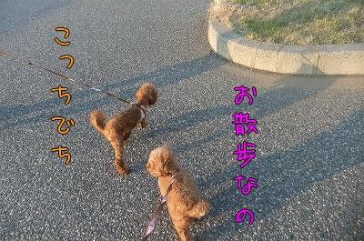 4.26お散歩