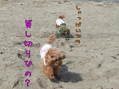 5.3砂浜