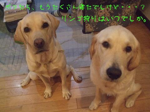 DSCF0010_20111120211112.jpg