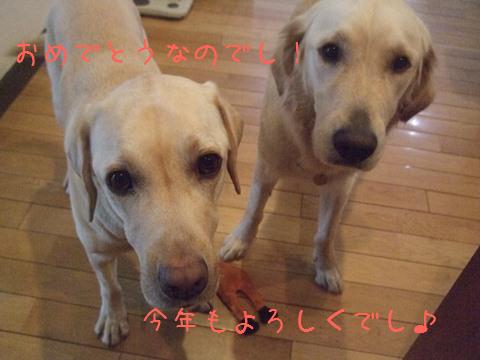 DSCF0062_20120101144953.jpg