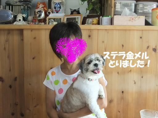 2011_0726保護犬0005
