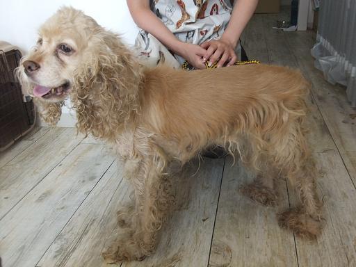 2011_0802保護犬0015