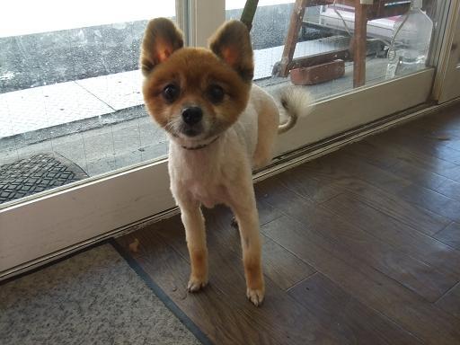 2011_0808保護犬0036