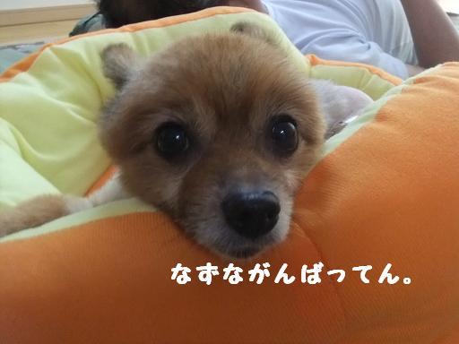 2011_0815保護犬0098