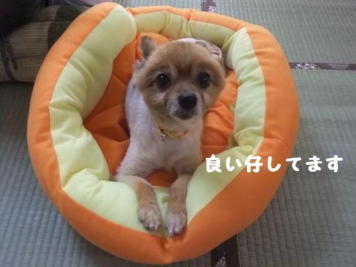 2011_0815保護犬0099