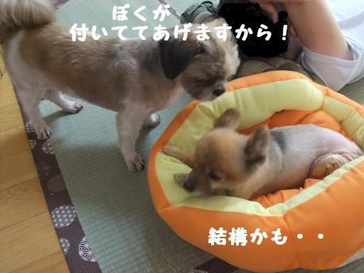 2011_0815保護犬0102