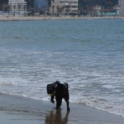 【れんと】波と踊る1