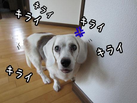 1_20110901152024.jpg