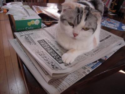 新聞の上に