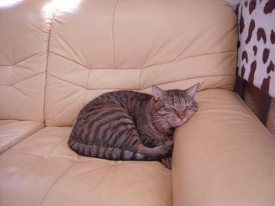 ひじあてを枕にタロウ