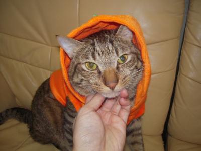 かぼちゃタロウ