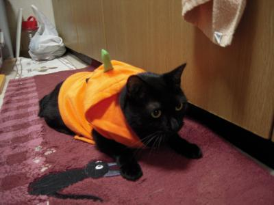 かぼちゃクロ