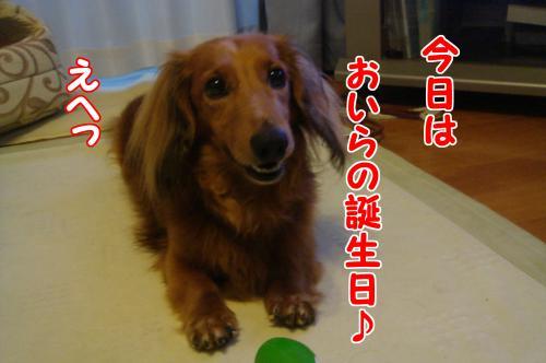 DSC08222_convert_20110809152731.jpg