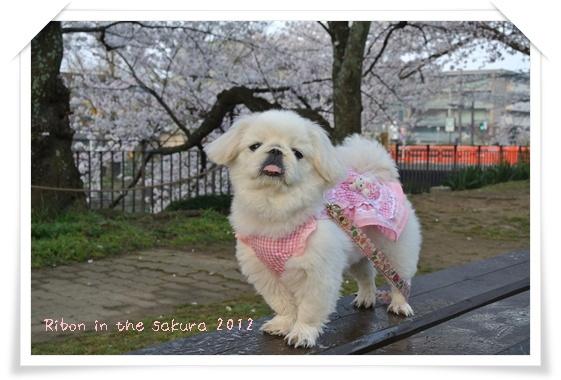 2012410桜U