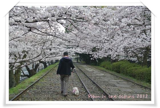 2012410桜 105