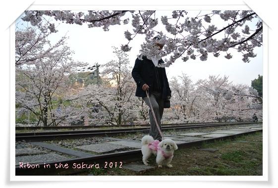2012410桜 E