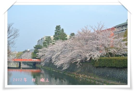 2012410桜 A